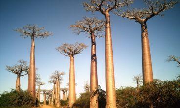 Ecotourism in Madagascar