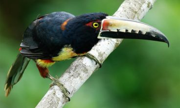 Panama: Ecotourism Between Two Continents