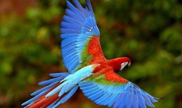 Ecotourism in Pantanal Brazil