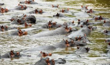 Uganda Water Safari